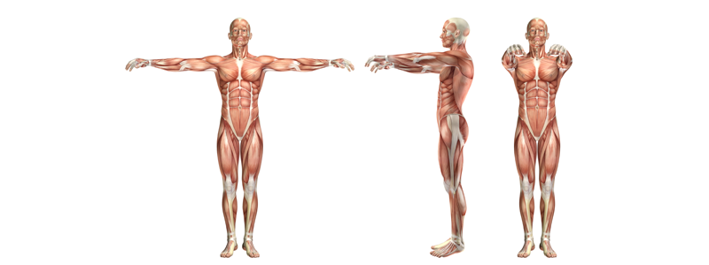 Illustration-of-muscular-system-and-the-impact-of-stress-on-the-body
