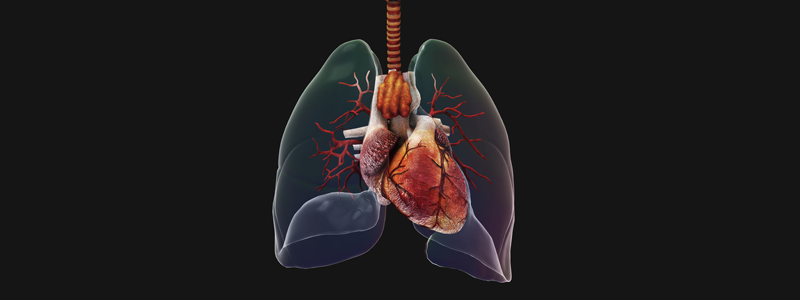 Illustration-of-the-respiratory-system